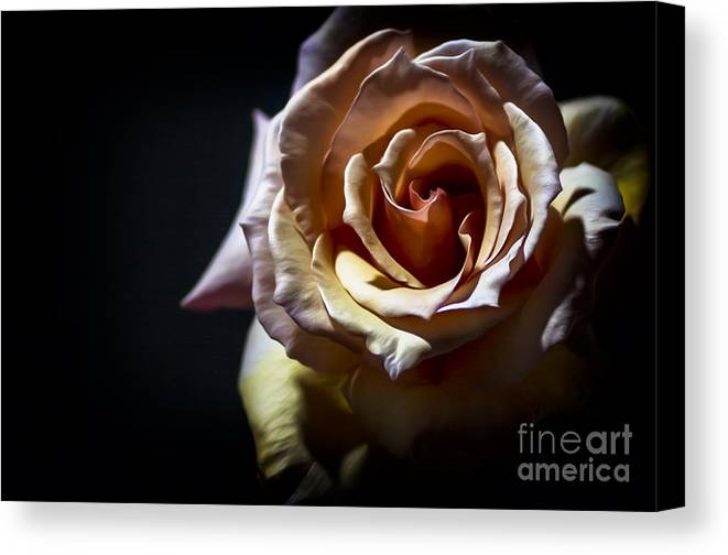 Black & White Canvas Print featuring the photograph Painted Rose by Holly Martin