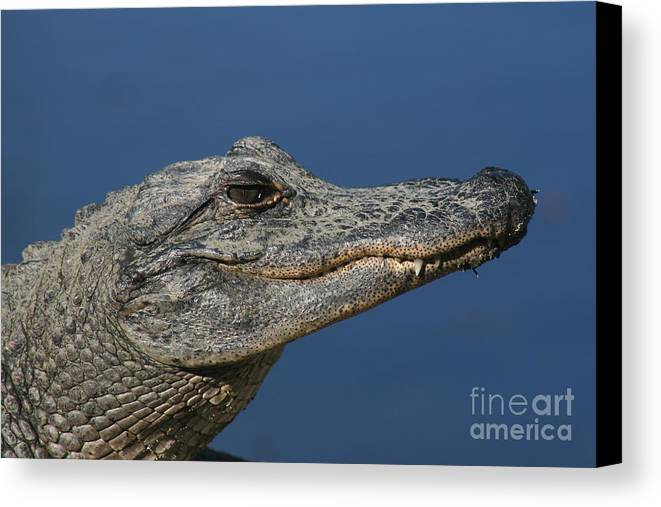 Alligator Canvas Print featuring the photograph Alligator by Ken Keener