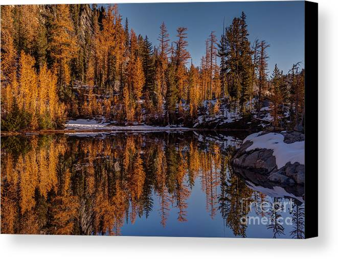 Larches Canvas Print featuring the photograph Autumn Reflected by Mike Reid