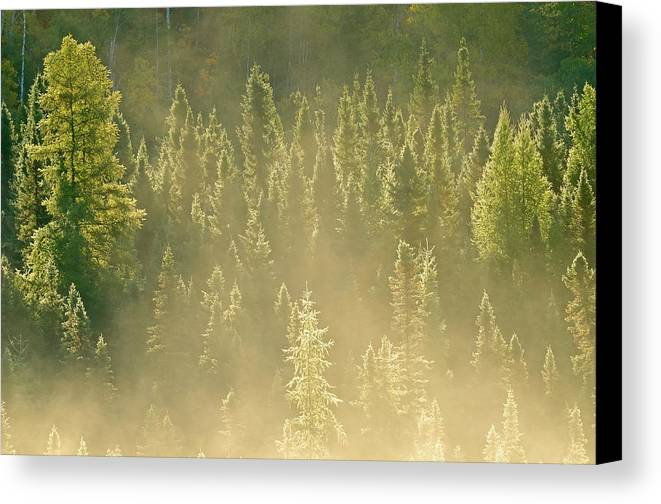 Backlit Canvas Print featuring the photograph Canada, Ontario, Worthington by Jaynes Gallery