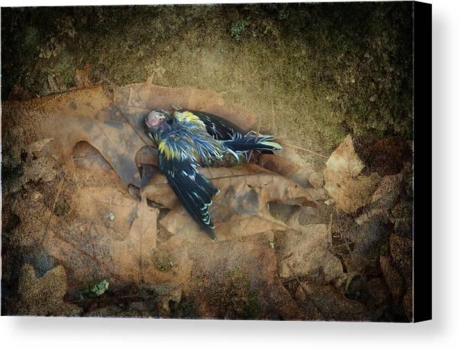 Bird Canvas Print featuring the photograph Fallen by Eagle Finegan