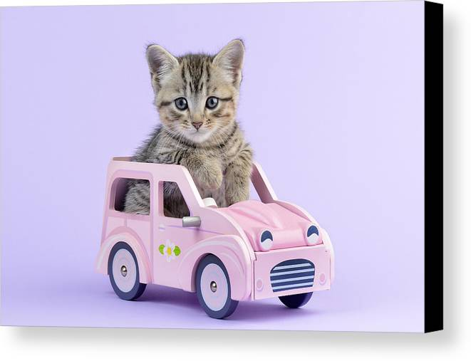 Tabbies Canvas Print featuring the photograph Kitten In Pink Car by Greg Cuddiford