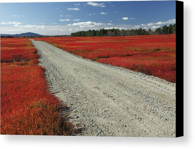 Feb0514 Canvas Print featuring the photograph Road Through Autumn Blueberry Maine by Scott Leslie