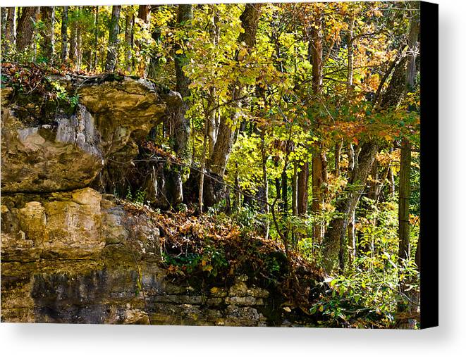 Branches Canvas Print featuring the photograph Rock Shelf And Forest by Ed Gleichman