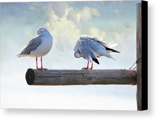 Springs Canvas Print featuring the photograph Seagulls by Heike Hultsch