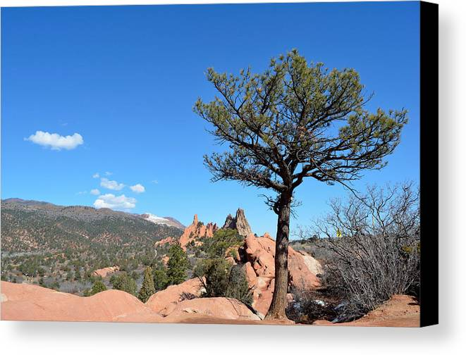 Landscape Canvas Print featuring the photograph Tree by Pam Romjue
