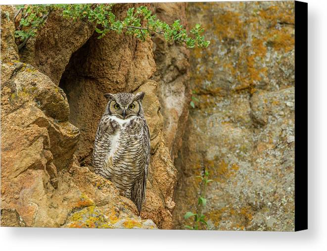 Avian Canvas Print featuring the photograph Usa, Colorado, Larimer County by Jaynes Gallery