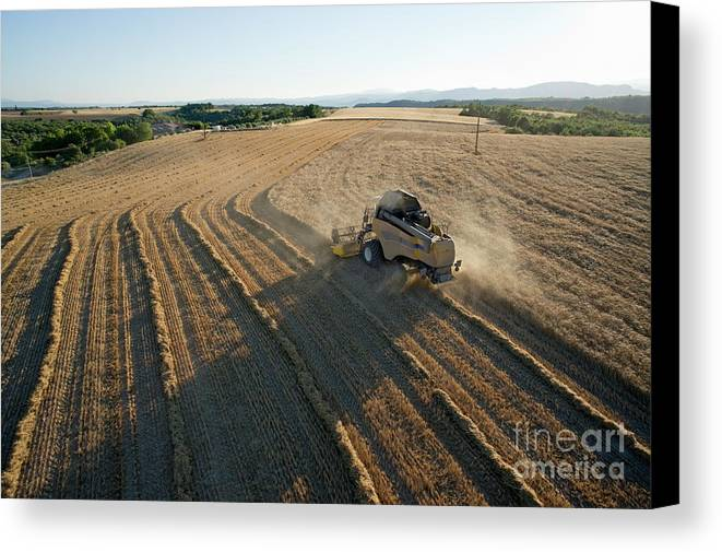 Abundance Canvas Print featuring the photograph Wheat Harvest In Provence by Sami Sarkis