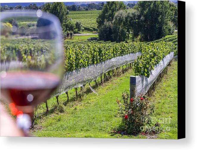 Wine Canvas Print featuring the photograph Wineglass In Vineyard by Patricia Hofmeester
