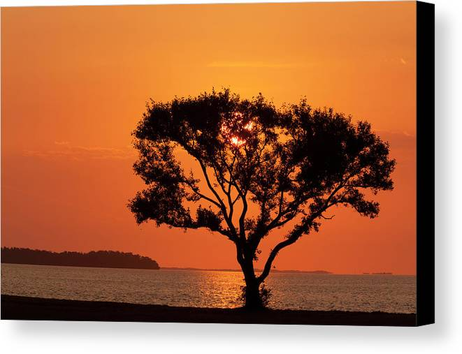 Bay Canvas Print featuring the photograph Usa, Florida, Everglades National Park by Jaynes Gallery