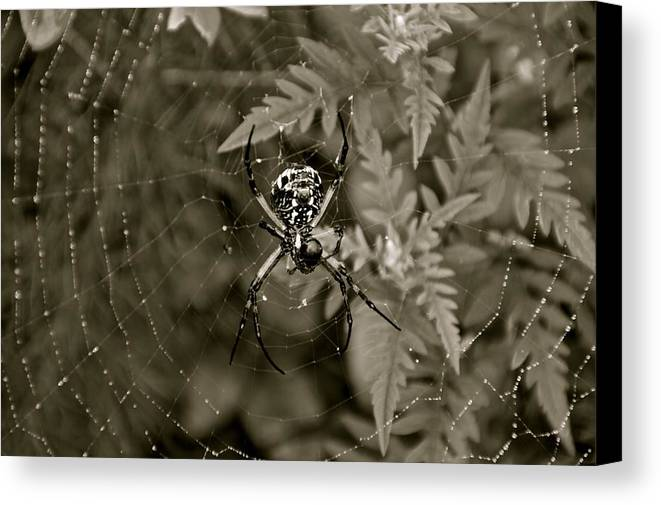 Art Bugs Insect Canvas Print featuring the photograph Art by Frank Conrad