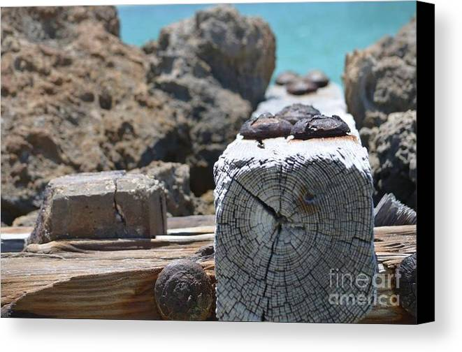 Wood Canvas Print featuring the photograph Photography Art by Dianamar Oz