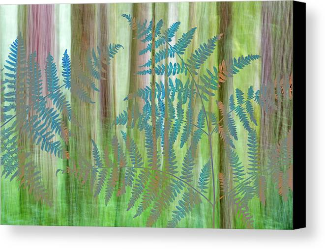 Abstract Canvas Print featuring the photograph Usa, Washington State, Seabeck by Jaynes Gallery