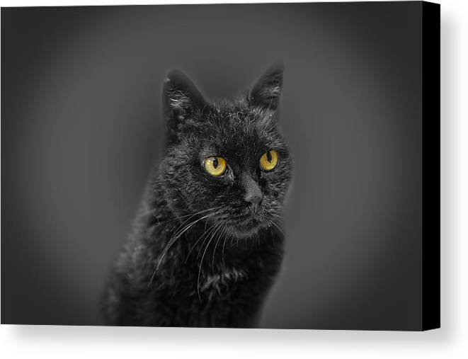 Animal Canvas Print featuring the photograph Black Cat by Peter Lakomy