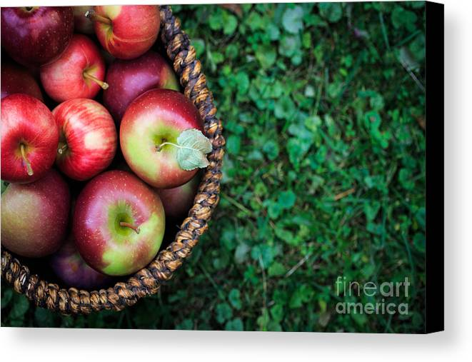 Food Canvas Print featuring the photograph Fresh Picked Apples by Edward Fielding