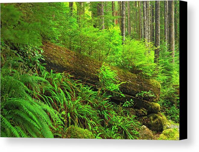 British Columbia Canvas Print featuring the photograph Canada, British Columbia by Jaynes Gallery