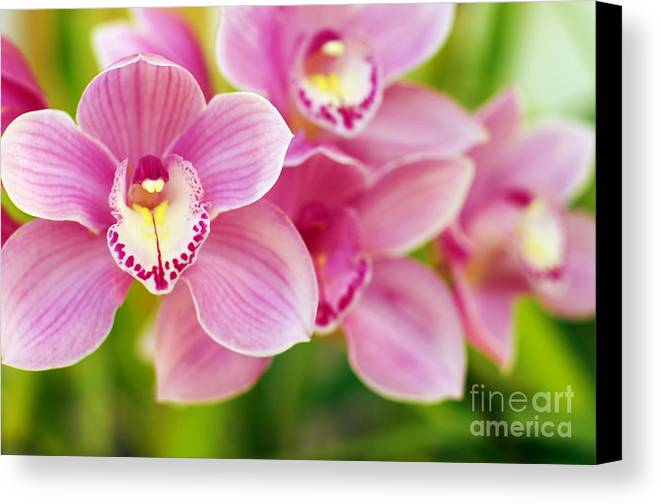 Abstract Canvas Print featuring the photograph Orchids by Carlos Caetano
