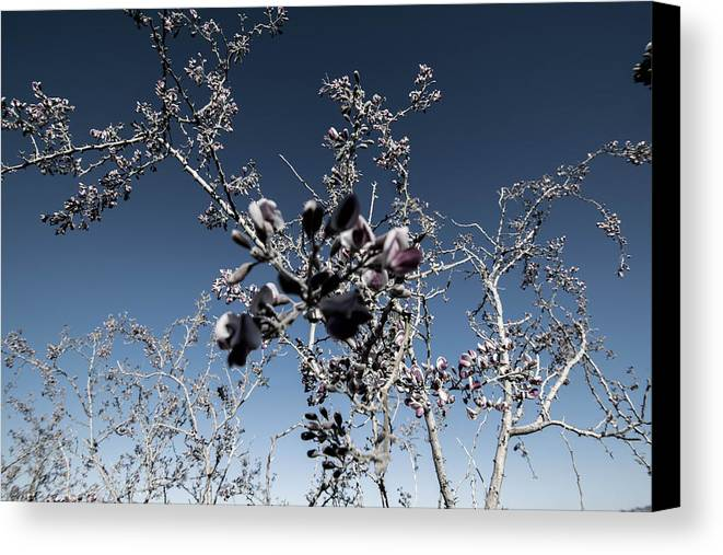 Wildflowers Canvas Print featuring the photograph Bella by Marit Runyon