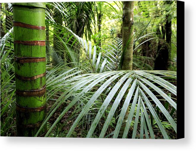 Tropics Canvas Print featuring the photograph Jungle by Les Cunliffe