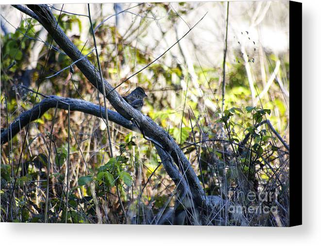 Print Canvas Print featuring the photograph 641 Cf Two Branches by Chris Berry