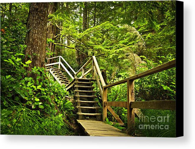 Rainforest Canvas Print featuring the photograph Path In Temperate Rainforest by Elena Elisseeva