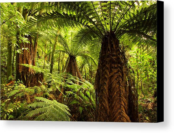 Color Canvas Print featuring the photograph Jungle by Les Cunliffe