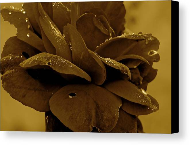 Art Flower Rose Canvas Print featuring the photograph Art by Frank Conrad