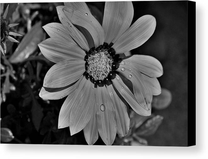 Flowers Canvas Print featuring the photograph Untitled by Paul Gavin