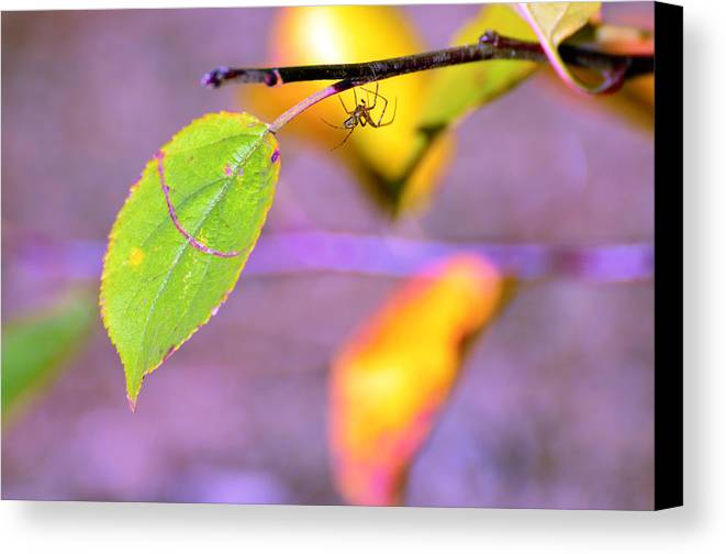 Leafs Canvas Print featuring the photograph A Branch With Leaves by Tommytechno Sweden