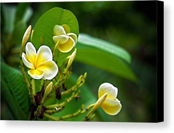 Flower Floral Botany Botanical Bloom Leaf Leaves Stem Pick Garden Pretty Beautiful White Yellow Bouquet Summer Background Horizontal Green Nature Blossom Spring Mother Florist Warm Plant Canvas Print featuring the photograph A Day In The Garden by Janna Scott