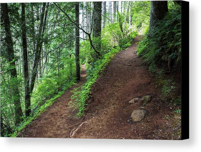 Forest Canvas Print featuring the photograph A Hiking Trail Goes Up Saddle Mountain by Robert L. Potts