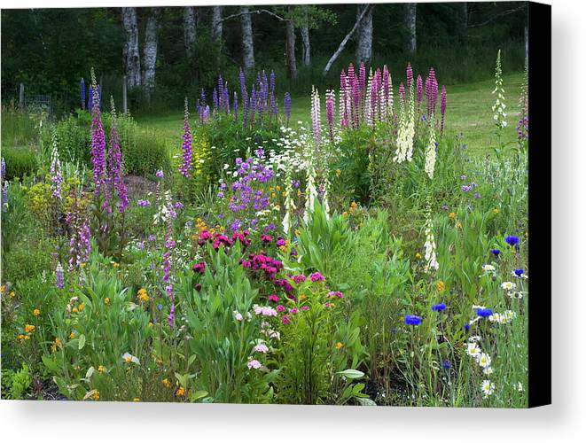 Variety Canvas Print featuring the photograph A Mixture Of Flowers Bloom In Hillside by Robert L. Potts