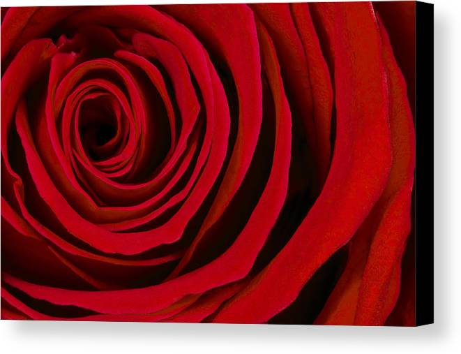 3scape Photos Canvas Print featuring the photograph A Rose For Valentine's Day by Adam Romanowicz