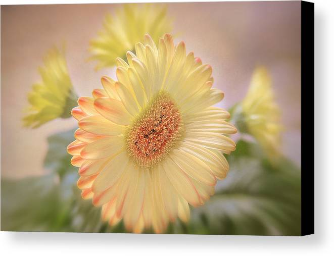 Flowers Canvas Canvas Print featuring the photograph A Touch Of Sunshine by Fiona Messenger