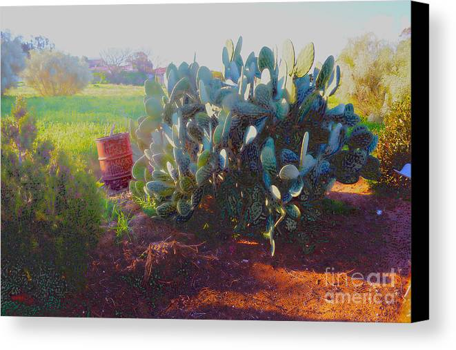 Cactus Canvas Print featuring the photograph Abandoned Lot I by Cassandra Buckley