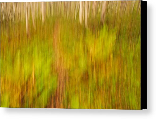 Abstract Canvas Print featuring the photograph Abstract Forest Scenery by Gry Thunes