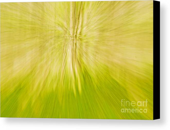 Abstract Canvas Print featuring the photograph Abstract Nature by Gry Thunes