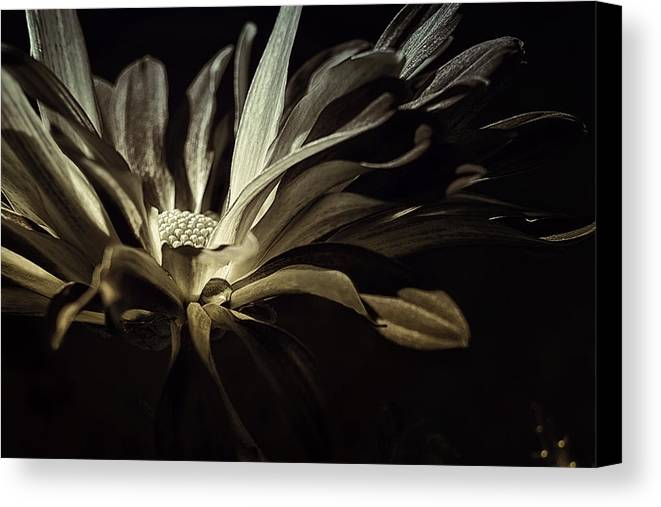 Floral Canvas Print featuring the photograph After Midnight by Darlene Kwiatkowski