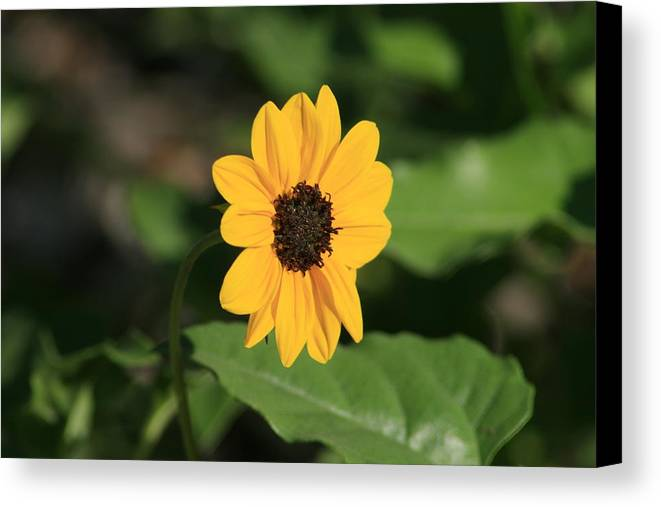 Flower Canvas Print featuring the photograph Alone But Strong by Paula Pizarro