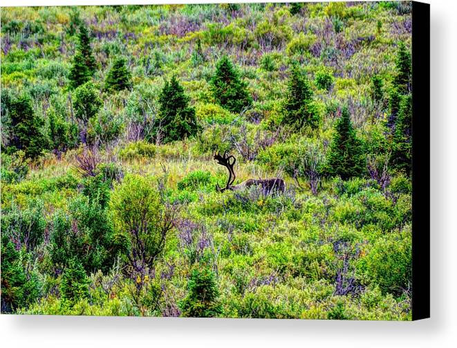 Alaska Canvas Print featuring the photograph Alone In Grizzly Country by Dennis Blum