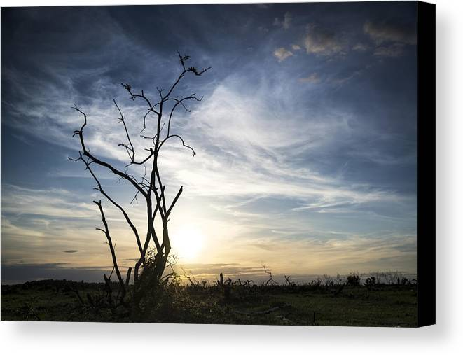 Landscape Canvas Print featuring the photograph Alone by Matthew Gibson