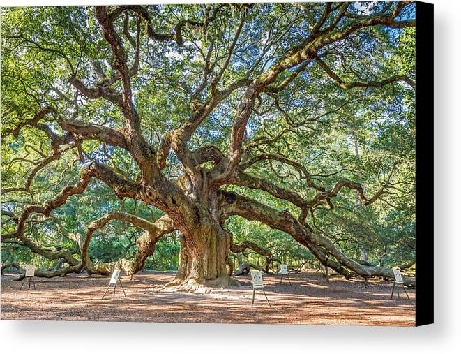 Charleston Canvas Print featuring the photograph Angel Oak Tree In Charleston Sc by Pierre Leclerc Photography