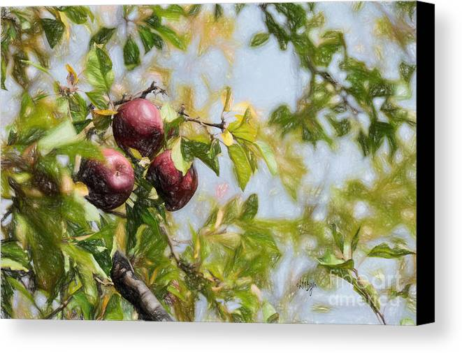 Apple Canvas Print featuring the photograph Apple Pickin' Time by Lois Bryan