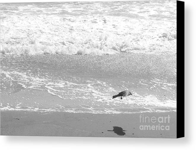Beach Canvas Print featuring the photograph As The Crow Flies by Artist and Photographer Laura Wrede