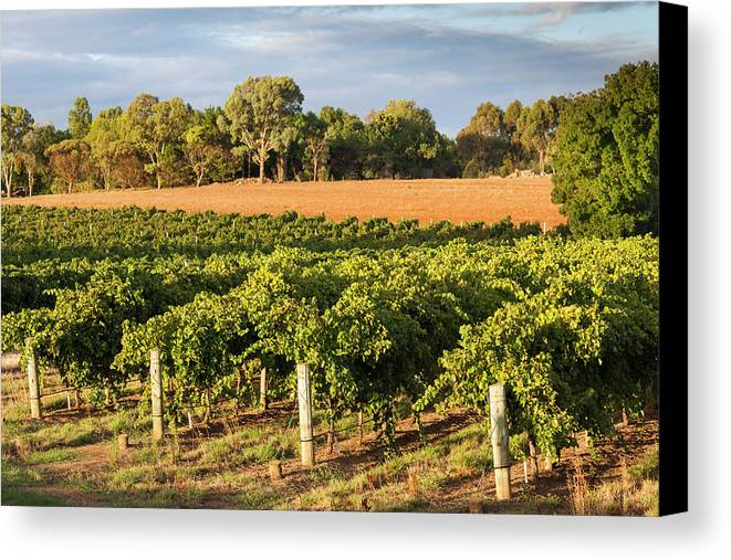 Australia Canvas Print featuring the photograph Australia, Barossa Valley, Lyndoch by Walter Bibikow
