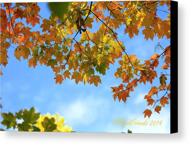 Autumn Blues Canvas Print featuring the photograph Autumn Blues by PJQandFriends Photography