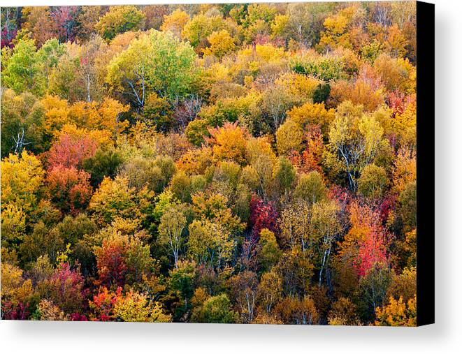 Autumn Canvas Print featuring the photograph Autumn Colors by Matt Dobson