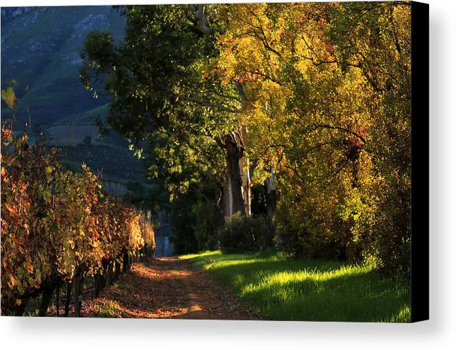 Autumn Canvas Print featuring the photograph Autumn Colors by Riana Van Staden