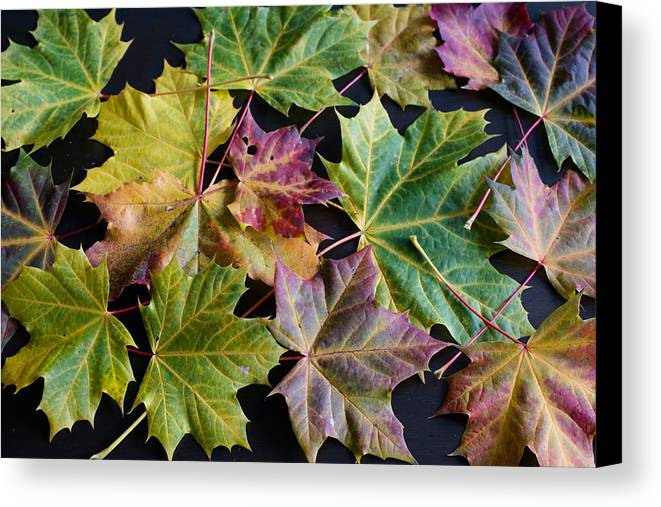 Maple Canvas Print featuring the photograph Autumn Maple Leaves by Frank Gaertner