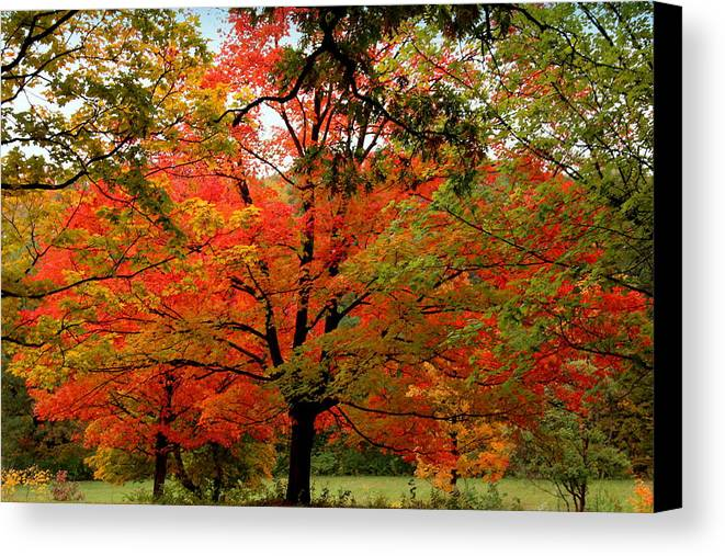 Autumn Canvas Print featuring the photograph Autumn Umbrella Of Color by Rosanne Jordan